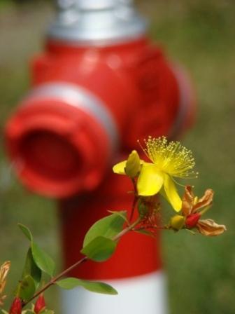 Képelemzés - Tűzcsap virággal