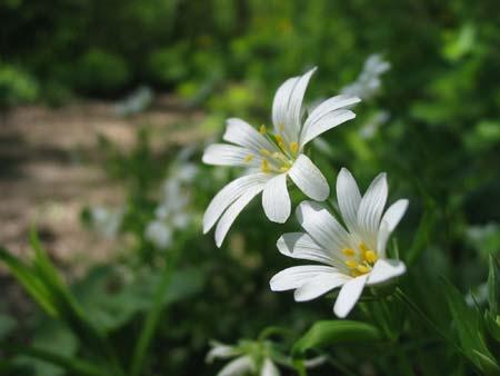 Képelemzés - Virágok