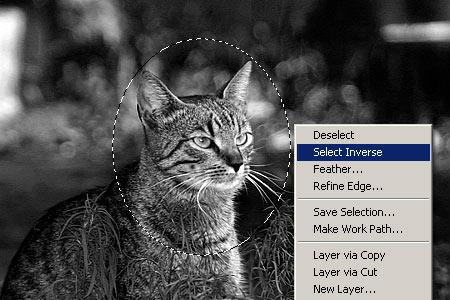 Zoom effektus Photoshopban 3.