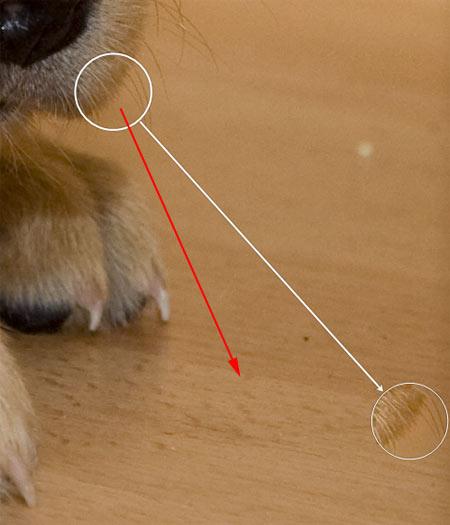 hogyan lehet eltávolítani egy piros foltot egy fotón