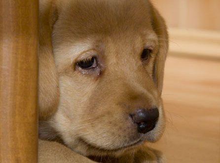 Piros szem eltávolítása Pixlr Editor képszerkesztőben