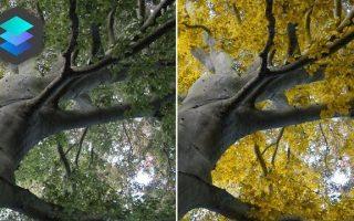 Nyárból ősz Luminarban